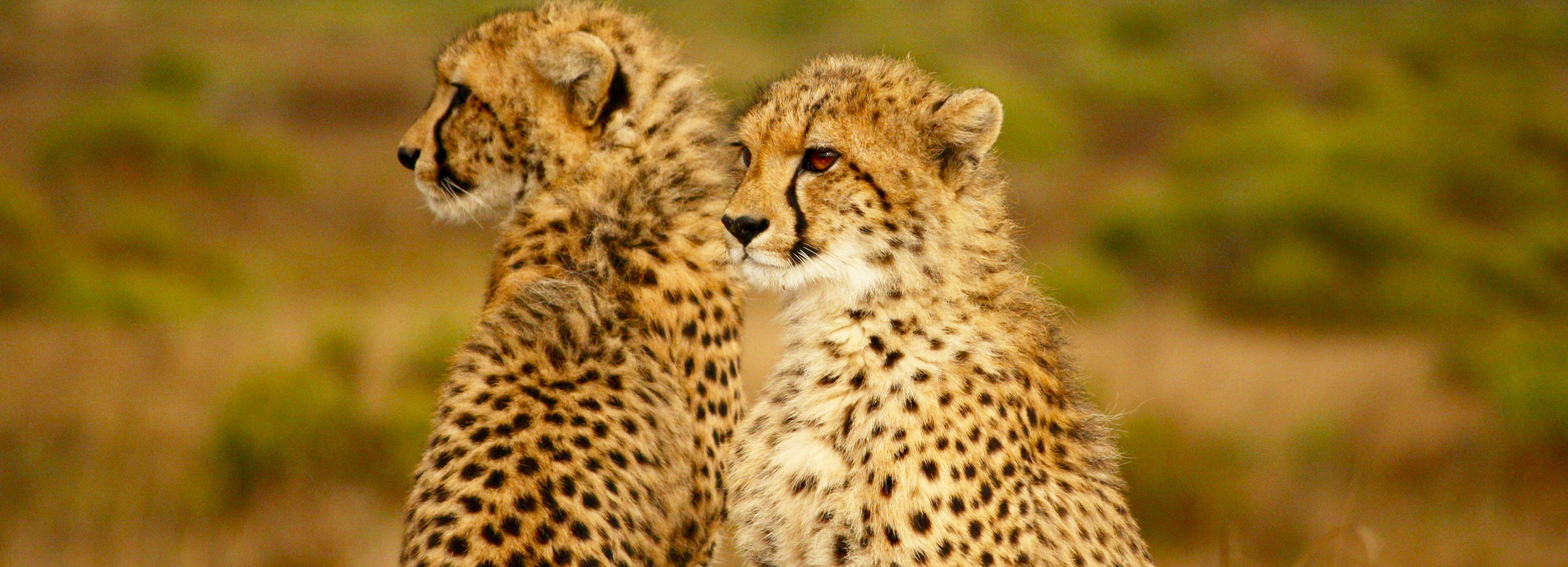 On Safari Africa - Safaris and Day Tours