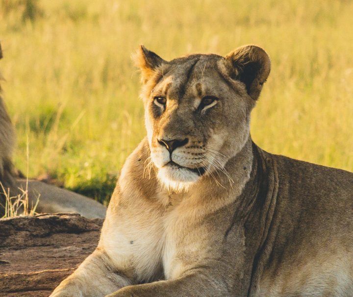 On Safari Africa - Safaris and Day Trips